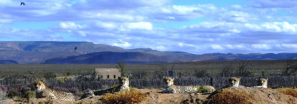 Beispiel Frontbild Südafrika 10